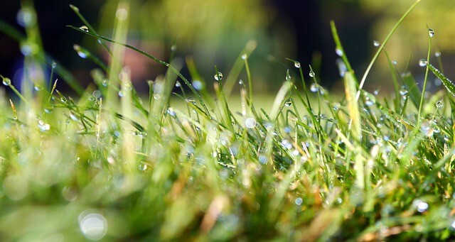 let atlas lawn care in lafayette indiana manage your lawn care needs
