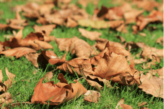 keep your yard free of leaves with atlas lawn care